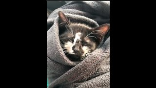 Defying All Odds, Kitten Slowly Recovers From Head Trauma - Video