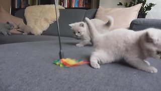 Curious kittens bewildered by new toy