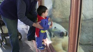 """Polar Bear Bonds with Kid Superman"""