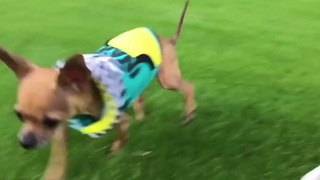 Dog Doesn't Let Disability Stop Him - Video