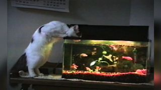 Cat Loves Fish Flavored Water