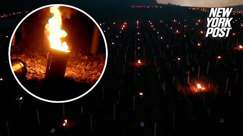 Winemakers use candles to fight sharp spring frost