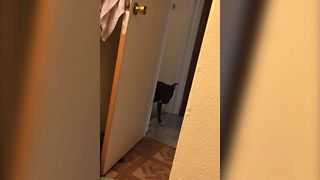 Excited Dog Plays Hide And Seek
