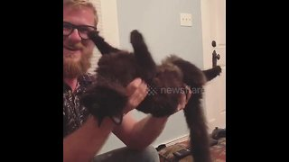 Noodle the cat stays super chill while being handled - Video