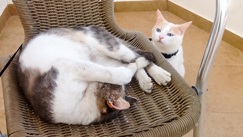 Cat Got Very Upset Because Another Cat Stole His Favorite Spot