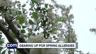 Spring allergies soon making comeback - Video