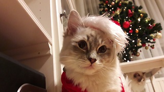Home goes to great lengths to cat-proof Christmas tree - Video