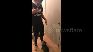 Cat Makes Adorable Leap Up Into Owner's Arms