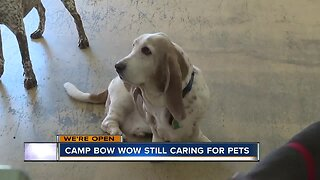 Camp Bow Wow still caring for pets during COVID-19