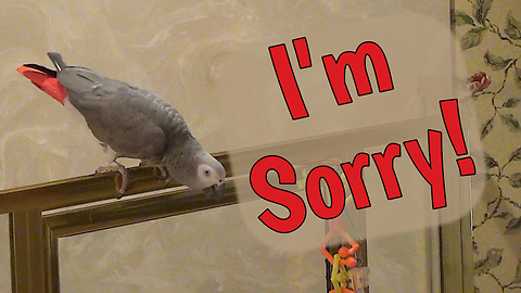 Apologetic parrot says