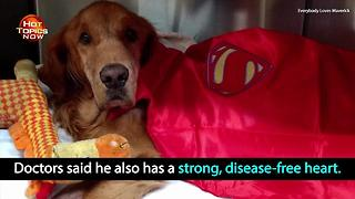 Dog who went viral for wagon ride makes strides against cancer - Video