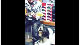 Dog sings along with street performer's guitar solo