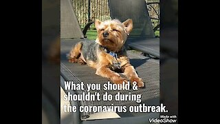 How to avoid the coronavirus: Dogs edition