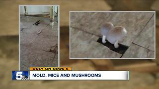'Of Mice and Mushrooms': Tenant alleges frequent leaks in apartment cause mold, fungus growth - Video