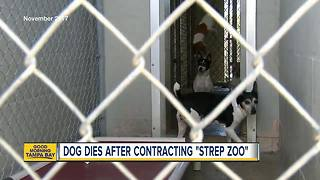 Dog dies after contracting 'Strep Zoo' - Video