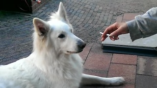 Clever dog disapproves cigarette - Video