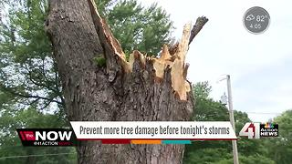 Prevent trees from toppling during storms - Video