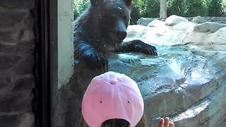 Brown Bear Plays Hide And Seek With Little Girl - Video