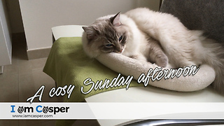 Ready for a sunday nap  - Video