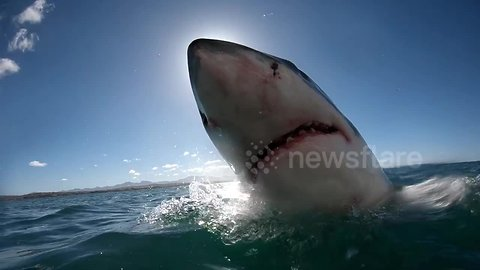 Breaching great white shark obscures sun completely