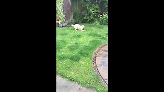 Light hailstorm causes utter confusion for doggy