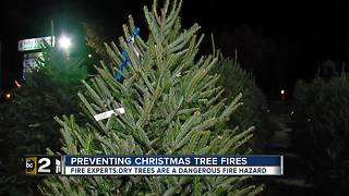 Christmas trees are festive but can be fire hazards - Video
