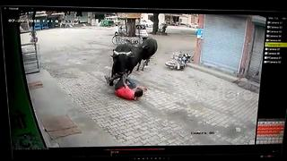 Man escapes dramatically after being trampled by fighting bulls