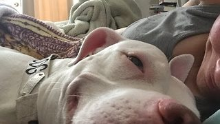 Cute Toddler and Deaf Pitbull Goof Around - Video