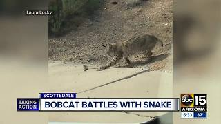Valley woman catches fight between bobcat and snake on video