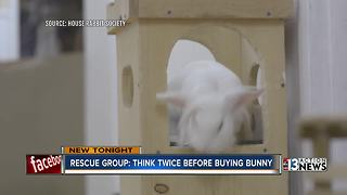 Bunny experts: Don't buy an Easter bunny