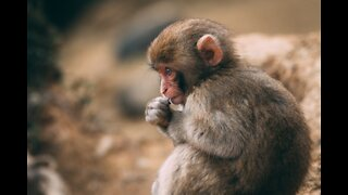 Best Monkey Moments with natural view