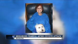 Dog killed by in Mequon after family of coyotes found living in nearby yard - Video