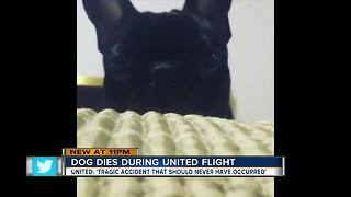 Dog dies on United flight after being put in overhead bin, airline confirms - Video