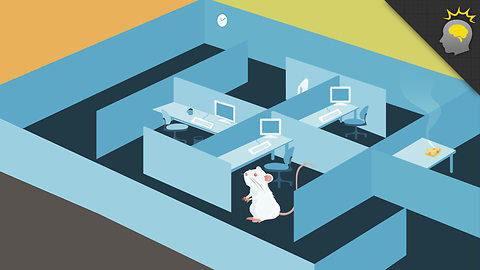 Stuff to Blow Your Mind: 5 Reasons Rats are Like Humans - Science on the Web