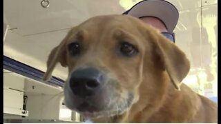 Dogs rescued in Bahamas arrive in West Palm Beach