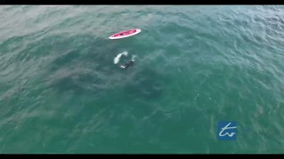Drone Captures Kayaker's Fascinating Orca Encounter - Video