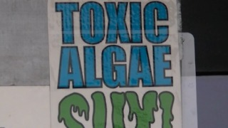 County looking at options to clean algae from river
