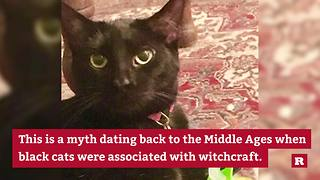 Black cats: 3 facts and myths | Rare Animals - Video
