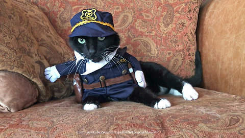 Funny talkative cat models police Halloween costume