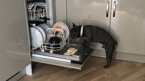 Frenchbulldog cry's at the dishwasher.