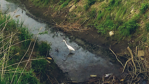 Healing nature during a pandemic: the appearance of a heron in a city ditch