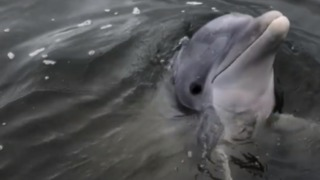 Dolphin Surprises Man and His Grandson on South Carolina Fishing Trip - Video