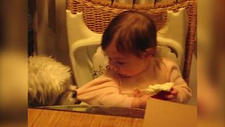 Dog Wants To Take Cream Away From The Baby - Video
