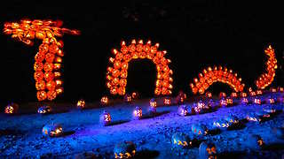 3 Pumpkin Festivals to Carve into Your Calendar This Fall - Video