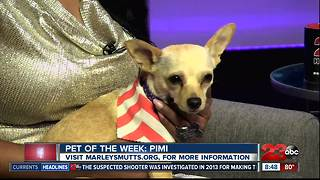 Meet our 23ABC Pet of the Week, Pimi! - Video