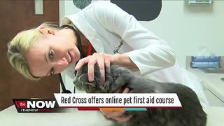 Crash course in pet first-aid - Video