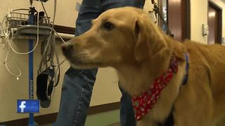 olunteers honor loved ones through pet therapy program at Aurora BayCare Medical Center