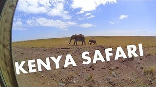 Wildlife at the Masai Mara National Reserve - Video