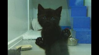 Abandoned Kittens Need New Home - Video