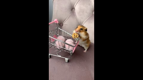 Cute Hamster With Little Shopping Cart